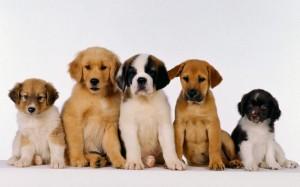 dog owner mailing lists